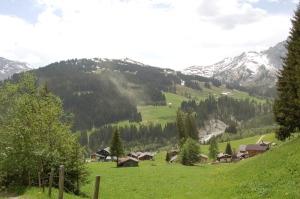 Kiefernpollen in Adelboden